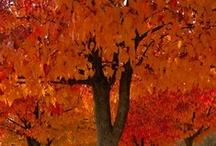 Cincinnati in the Fall / Cincinnati - a beautiful place all year long but especially in the fall!