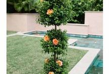 Decor - Orange