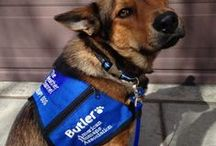 Butler The Weather Channel Therapy Dog / Woof Woof! I'm Butler - The Weather Channel Therapy Dog. I will visit communities impacted by severe weather. I live with my mom/trainer Amy McCullough.
