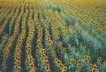 France.... ah oui!! / Annie Sloan heeft veel kleur inspiratie gehaald uit Frankrijk dat kunt u zien bij de Annie Sloan kleuren.