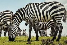 Travel: Africa / Travel stories and photography from beautiful African destinations.