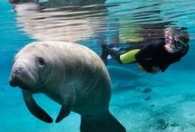 Travel: Animals and Wildlife / Travel destinations for animal lovers. / by The Weather Channel