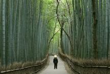 Japan Travel / by Shanu