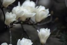 Flowers..plants..