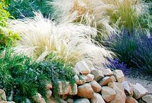 16 Sword Backyard Re-Design Project / Planning our backyard re-design & planting. The first major project for our little house on Sword Street. Hard scape by Land Art. Plant design by the Garden Girls.