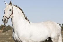 Horses - Black & White