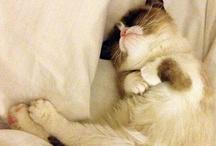 It's sooooo fluffy I'm gonna die!! / by Gypsy Rose Leigh