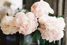 Flowers / by Jocelyn Villanueva