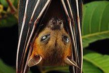 I LOVE bats!!!  / by Marlene Whelan