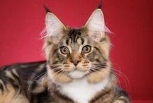 Cats  / by Trisha Broom