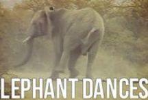 Elephants / Aren't they amazing?