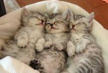 Kitties ♥♥♥ / All things kitty!!  ==^..^==