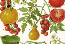 botanical illustration / lithographs of fruits, vegetables, flowers, fauna, and minerals. / by food + words