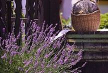 Lavender Love / Stop and smell the lavender...
