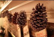 Pinecones / by Norma Breaux
