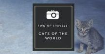 Cats Of the World / Photos of the cutest cats I've snapped on our travels. http://www.twouptravels.com/tag/cats/