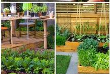 Gardens & Outdoors / by The Baking Beauties