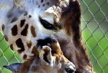 ADORABLE  ANIMALS / Guaranteed to make you SMILE if you like animals! / by Gigi Curtis