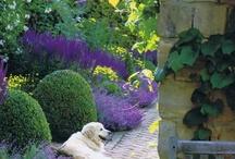 Garden Favorites / by Lizzie Verney