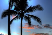 Beachy...Beachy...Beachy! / by Donna Williams
