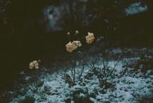 flowers (nature you genius)