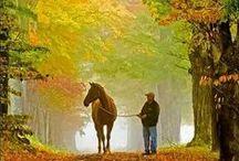 Autumn / by Lizzie Verney
