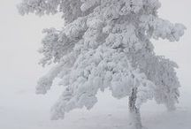 Winter Wonders / by Lizzie Verney