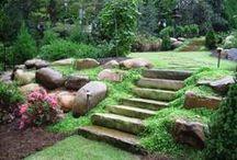 Backyard Gardening
