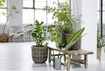 Plants indoor / Inspiration to a beautiful green indoor decor with plants