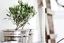 [ Green / Plant + interior ]