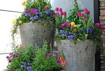 Ideas for our Home - Front Yard