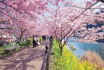 Japan Travel / Japan travel, things to do in Tokyo, spas in Japan, Japanese cherry blossom season, what to eat in Japan, Tokyo Disneyland, Japanese culture, site-seeing in Japan, hotels in Japan and beyond.
