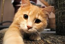 CATS / by Mcrea Cathleen