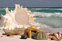 Shells / May you always have a shell in your pocket and sand in your shoes / by Anita Gallagher
