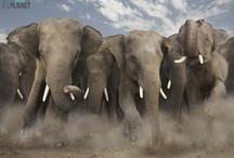 Elephants / by Anita Gallagher