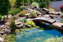 Backyard Oasis / Leisure days  / by K. Willoughby