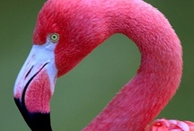 All Things Flamingo / by Iolanthe
