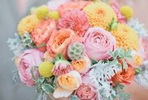 For the love of Sherbet / by Winsor Event Studio