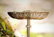 magical world of fungus and mushrooms / by Mariana Karloukovska