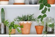 House Plants for health / The best house plants for keeping your environment healthy and toxin free