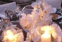 Tablescapes/Table Settings / by Diana Brown-Meyer