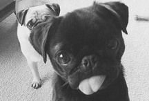 pugs not drugs / because im obsessed with them....the pugs...not drugs / by Autumn Charles