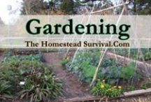 * Gardening / Gardening for a delicious flavorful harvest to feed your family. Fruits, Vegetables, Herbs and Flowers
