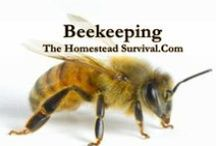 Beekeeping / Beekeeping is the maintenance of honey bee colonies in hives by people in hopes of producing beeswax, pollen, honey, and to help pollinate crops. Save the Bees ! / by The Homestead Survival
