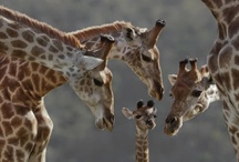 Sweet & Adorable Animals / by Francisca Giannini