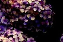 Garden / by Laura Marquez