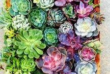 garden love for mim. / by Katie Wagner