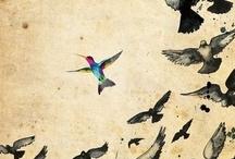 rainbow spots / by Nusi Ascher