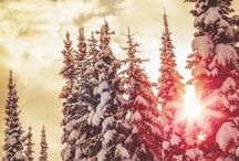 winter wonderland. / by Katie Wagner