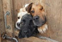 Wagging tails!! / dogs, pets, animals, tails, a mans best friend, honde